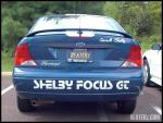 shelby_focus_back